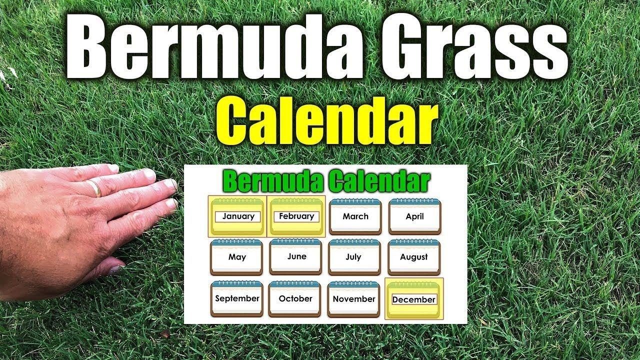 Bermuda Grass Calendar